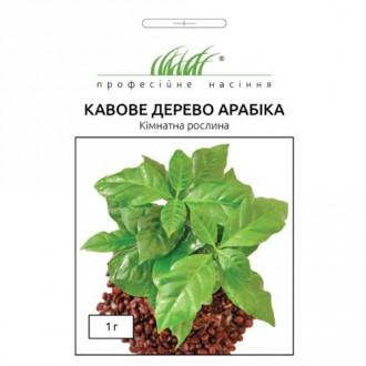 Кофейное дерево Арабика Профессиональные семена рисунок 1