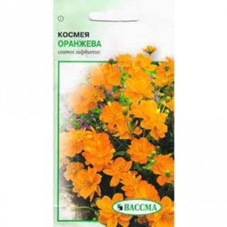 Космея оранжева Seedera зображення 4