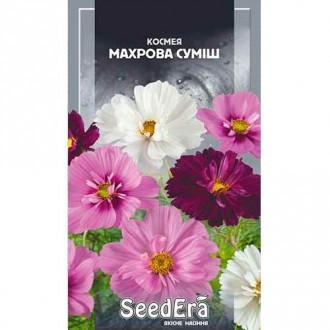 Космея Пикоти, смесь окрасок Seedera рисунок 6