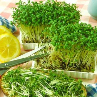 Крес-салат Гладколистий Seedera зображення 3