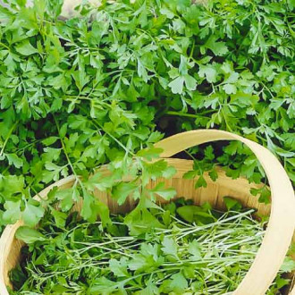 Кресс-салат Кудрявый Seedera рисунок 2