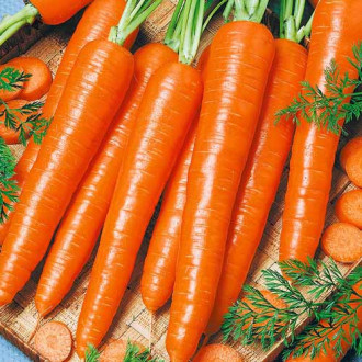 Морковь Детская сладкая Яскрава рисунок 8