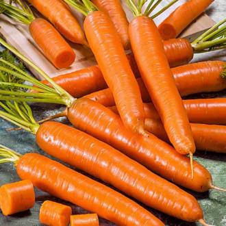 Морковь Амстердамска Seedera рисунок 3