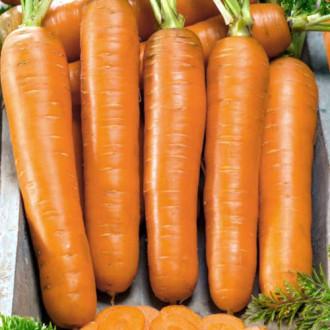 Морква Флаккоро Seedera зображення 1