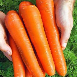 Морква Королева осені Seedera зображення 8