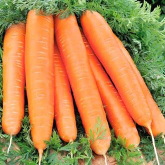 Морква Червоний велетень Seedera зображення 4