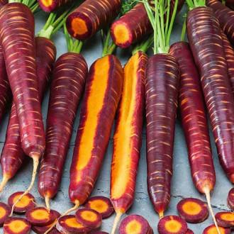 Морковь Пурпурный космос Seedera рисунок 7