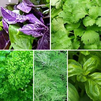 Набір насіння Ароматна грядка з 5 упаковок, суміш сортів Seedera зображення 6