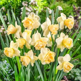 Нарцис великоквітковий Арт Дизайн зображення 8