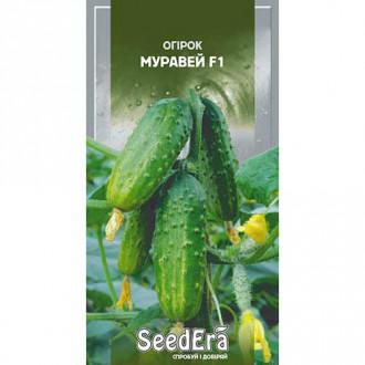 Огірок Муравей F1 Seedera зображення 5
