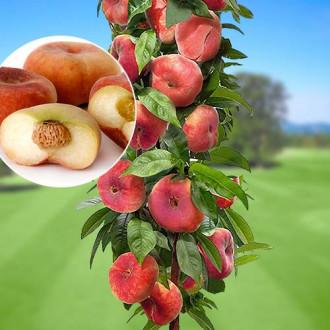 Персик колоновидный Инжирный рисунок 8