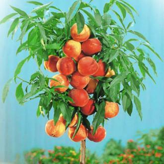 Персик колоновидный Золотой триумф рисунок 5