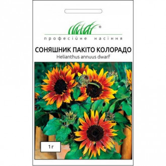 Соняшник Пакіто Колорадо Професійне насіння зображення 7