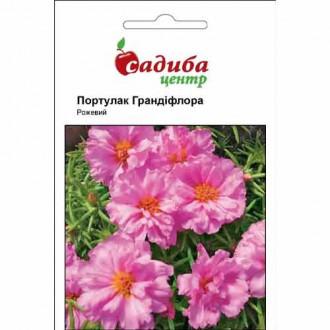 Портулак Грандіфлора рожевий Садиба центр зображення 5
