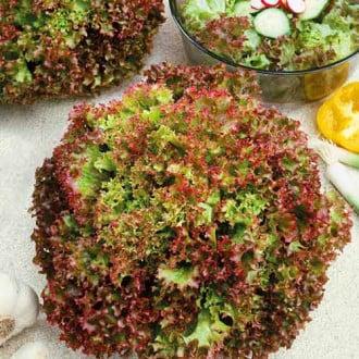 Салат листовий Бебі червоний Seedera зображення 5