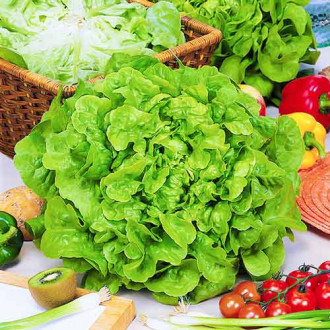 Салат листовой Бэби зеленый Seedera рисунок 7