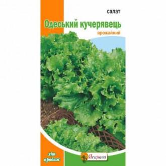 Салат листовой Одесский кучерявец Яскрава рисунок 6