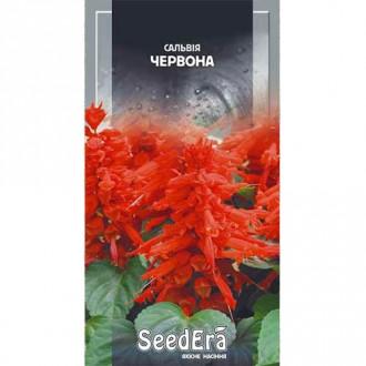 Сальвия блестящая красная Seedera рисунок 4