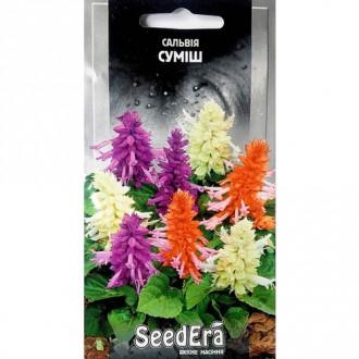 Сальвия блестящая, смесь окрасок Seedera рисунок 4