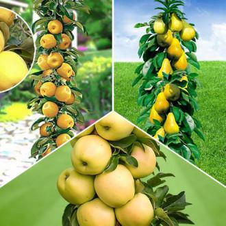 Суперпропозиція! Комплект колоновидних дерев Осіння вдача з 3 саджанців зображення 8