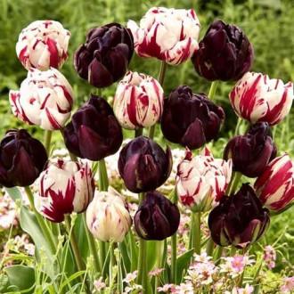 Суперпредложение! Комплект махровых тюльпанов Магия цвета рисунок 8