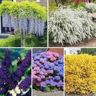 Суперпропозиція! Комплект Багатолітній сад з 5 саджанців зображення 2