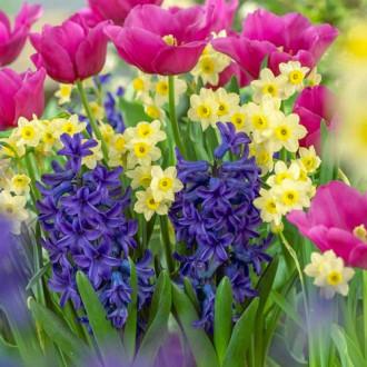 Суперпредложение! Комплект нарциссов, тюльпанов, гиацинтов из 20-ти луковиц рисунок 6