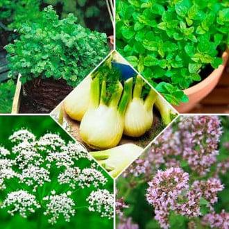 Набір насіння Прянощі до птиці з 5 упаковок, суміш сортів Seedera зображення 6