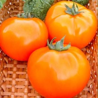 Томат Апельсин Seedera зображення 4