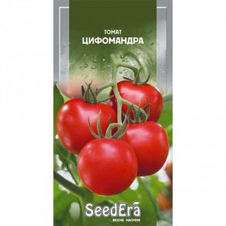 Томат Цифомандра (томатное дерево) Seedera рисунок 2