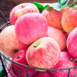 Яблоня Налив розовый рисунок 6