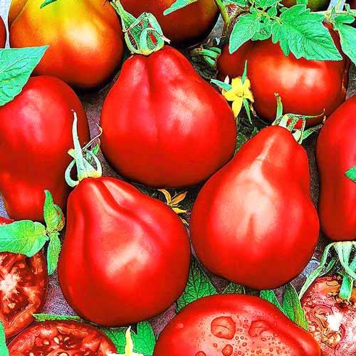 Томат Трюфель червоний Seedera зображення 1 артикул 65625