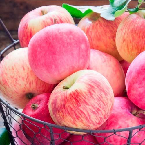 Яблуня Налив рожевий