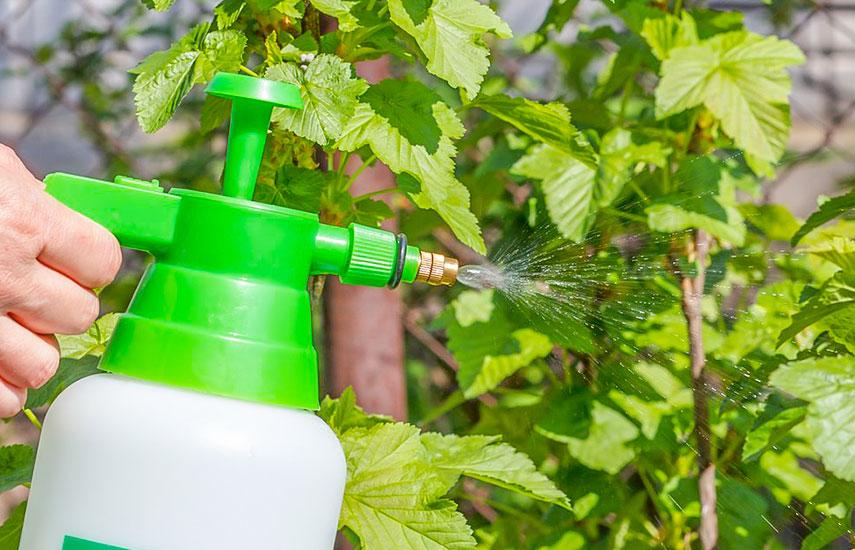 Обробка саду навесні