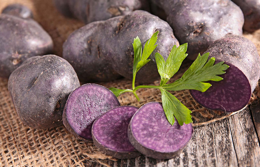 фіолетова картопля користь вирощування