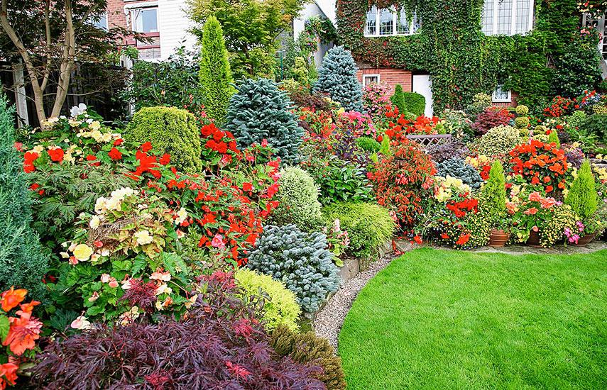 як спланувати посадки в саду