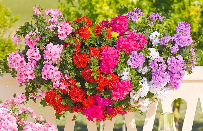 Весняні ампельні квіти