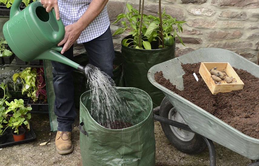 выращивание картошки в мешках бочках пакетах