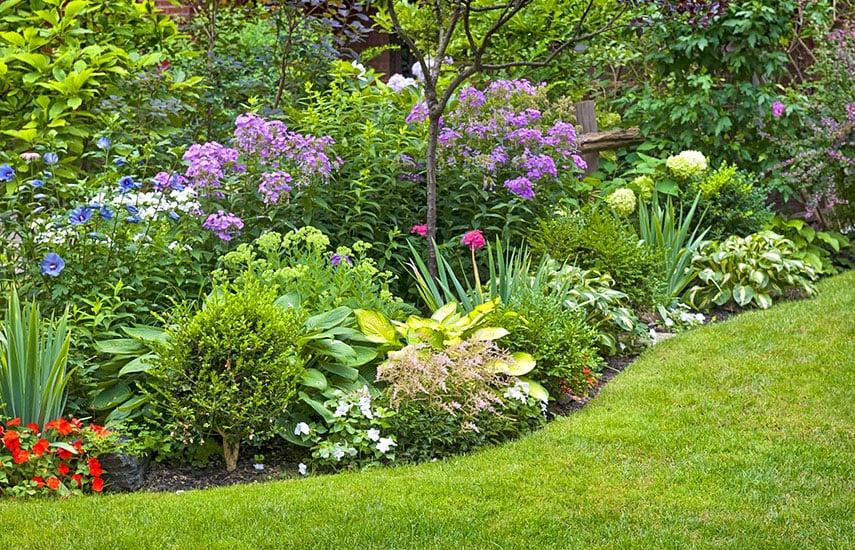 Як правильно спланувати ділянку і створити сад своєї мрії