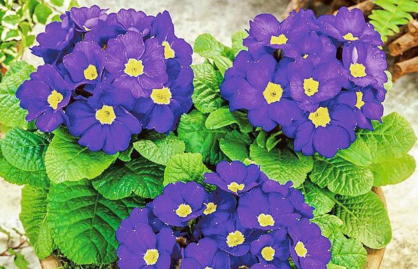 цветы на рассаду в феврале