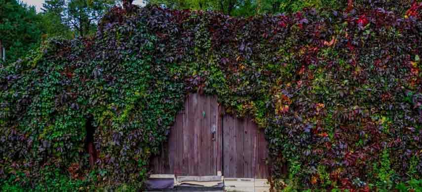 Что посадить на даче, чтобы отгородиться от соседей 6
