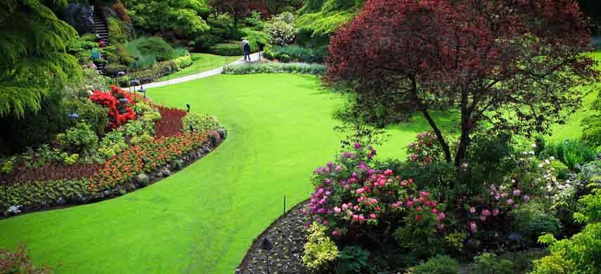 Совместимость деревьев в саду фото 2