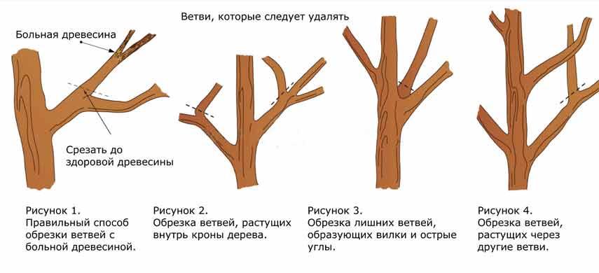 Як підвищити морозостійкість плодових дерев фото 3