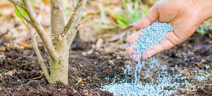 удобрения под деревьями