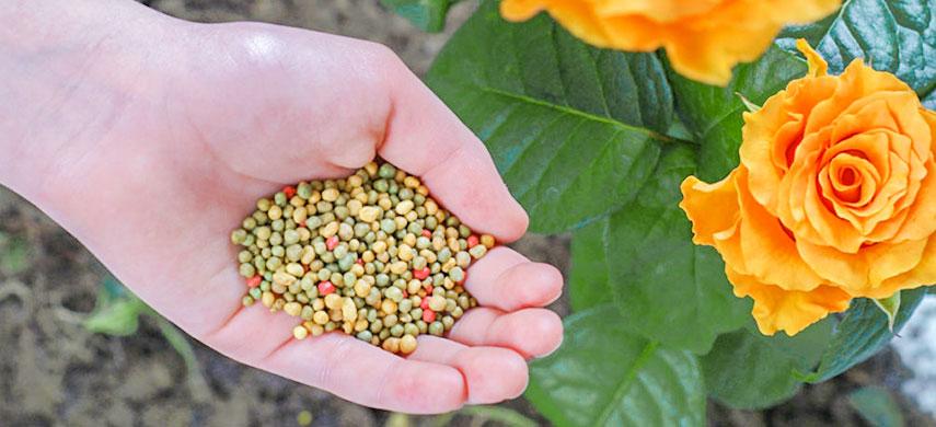 цветы и удобрения