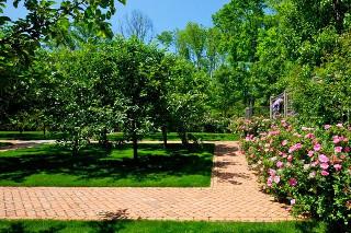 Планування саду