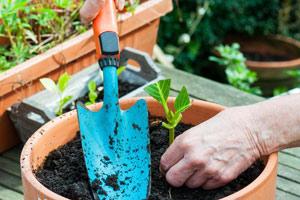 как подготовить почву для гортензии