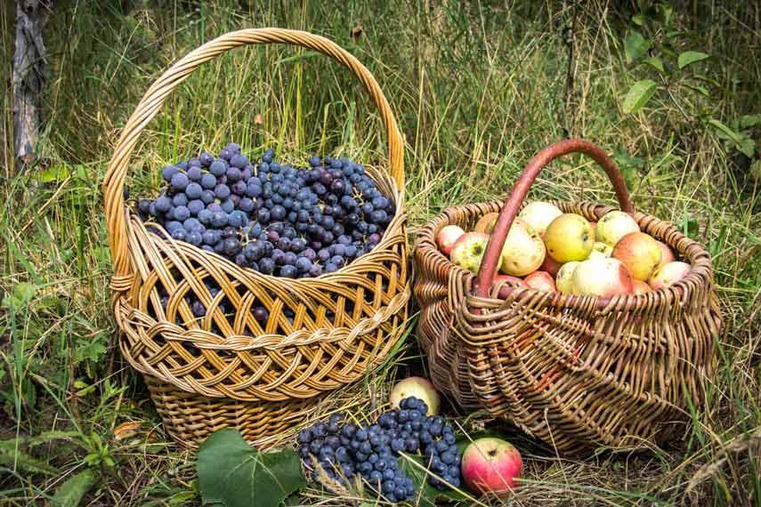 Багатий урожай