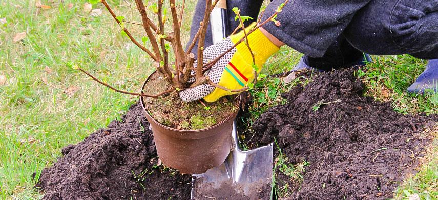 Плодові дерева та кущі: що саджати восени і як це робиться №1