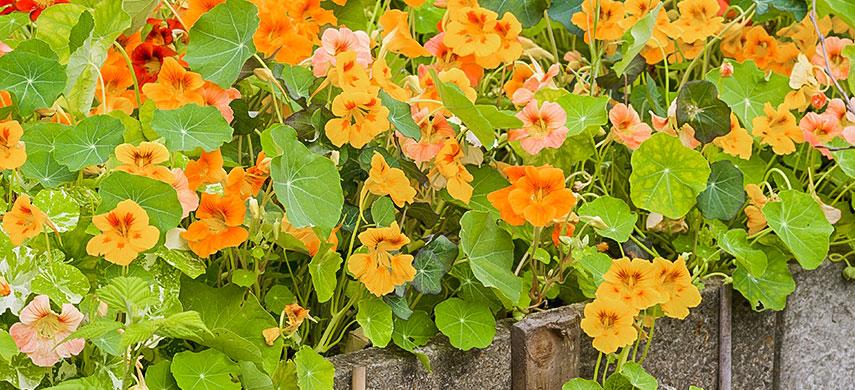 Гарний сад без турбот: обираємо найбільш невибагливі квіти №1